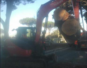 Rimozione Pini su SP329 Provincia di Livorno - Vanni Pierino - Pisa e Livorno