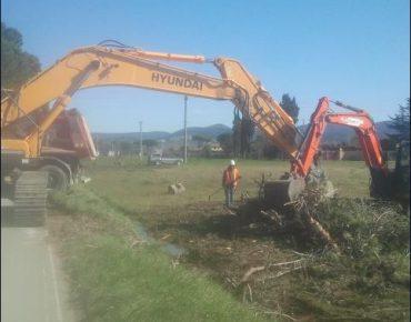 Extreme urgency for removing fallen pines on 17 County road – Provincia of Livorno 2015 - Vanni Pierino - Pisa e Livorno
